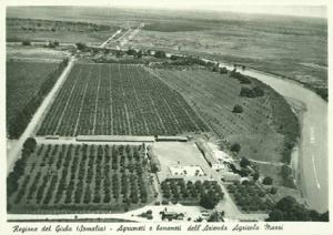 azienda_agricola_somalia_bananeti
