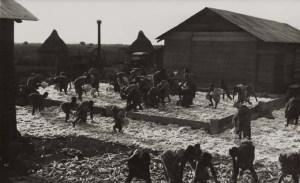 Genale lavorazione del cotone e del granturco
