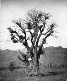 Eritrea_Nella terra del facoceri_Luigi Fossati (3)