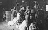 Genale pressatura del cotone in balle