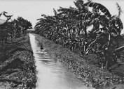 Genale un bambino somalo si bagna in un canale