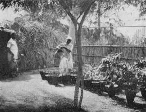 1931-Vivaio a Mogadiscio2