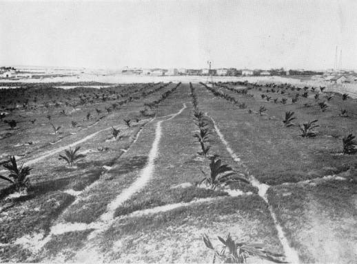 1931,Mogadiscio-Coccheto nella zona del lazzaretto