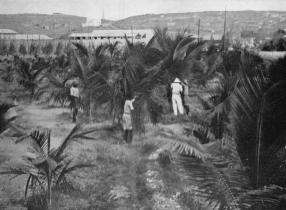1931,Mogadiscio-Impianto di un coccheto presso la ferrovia