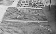 1931,MogadiscioRimboschimento nei pressi del villaggio arabo