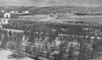 1932, Mogadiscio-Il rimboschimento presso le carceri