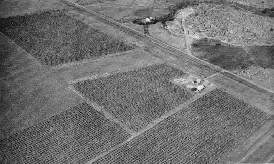 Alcune coltivazioni a Genale viste dall'aereo
